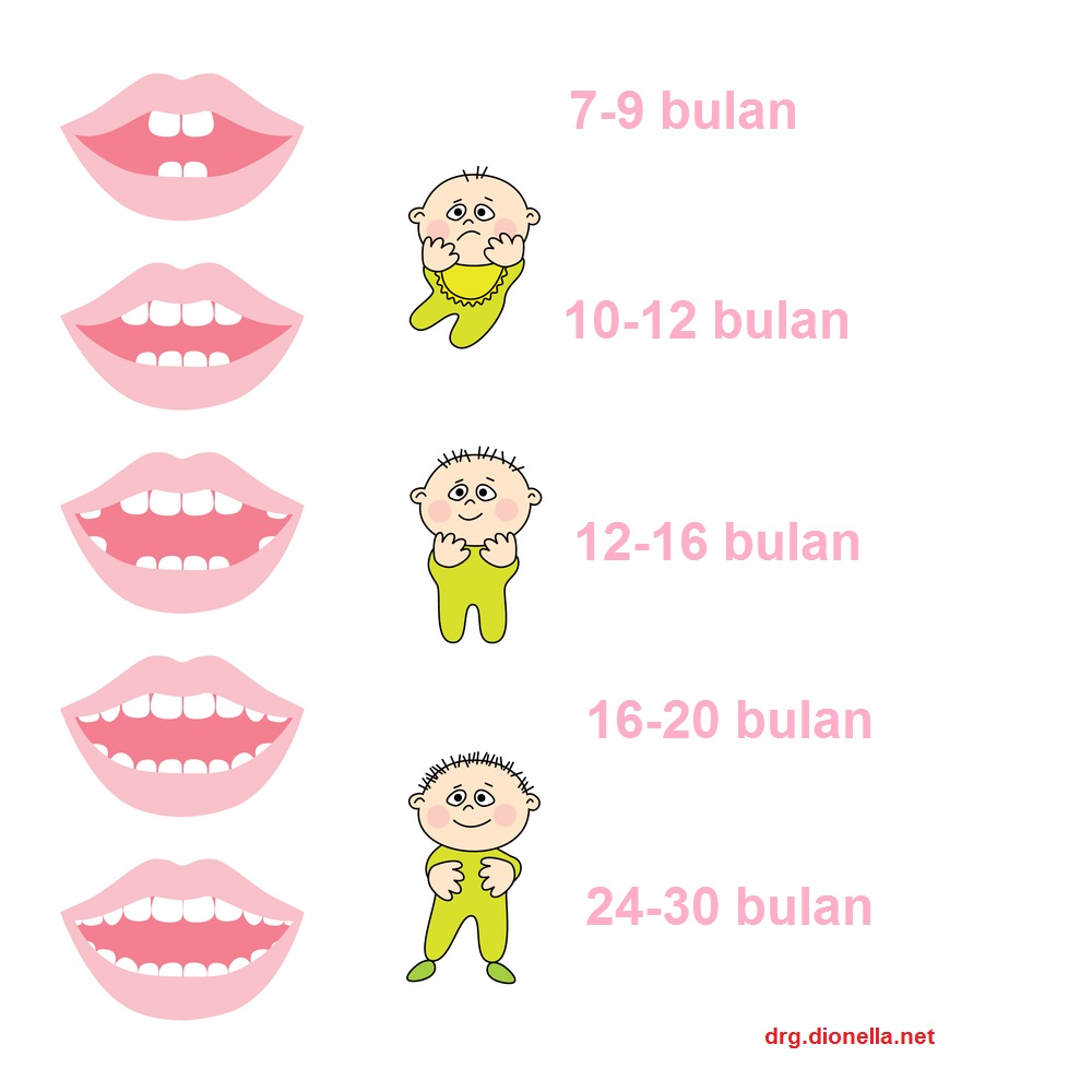 urutan tumbuh gigi pada anak